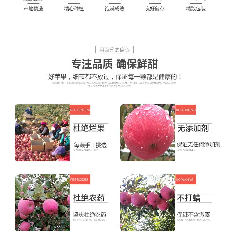 洛川苹果_06.jpg