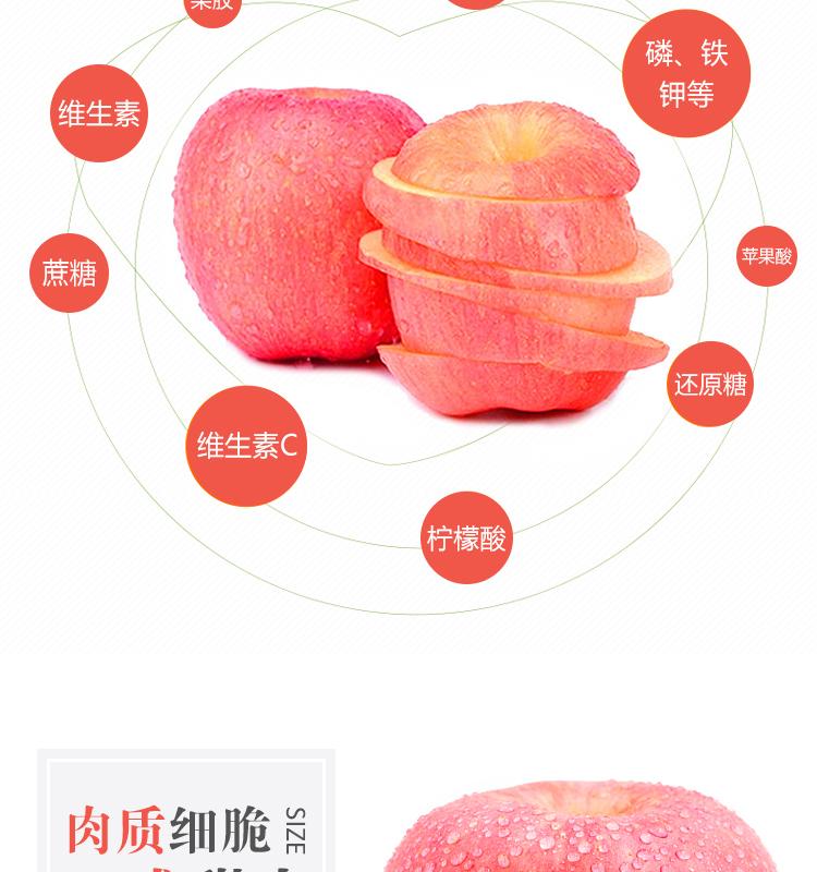 洛川苹果_03.jpg
