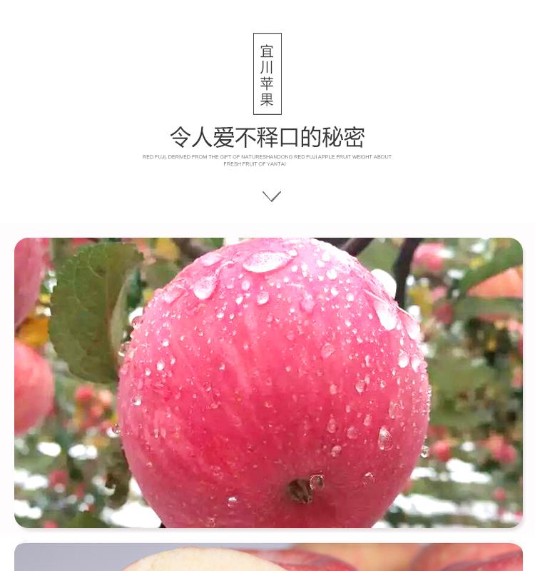 宜川苹果_07.jpg