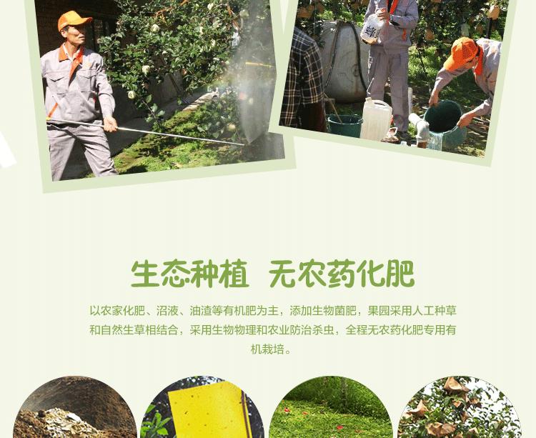 华红绿盒子_06.png
