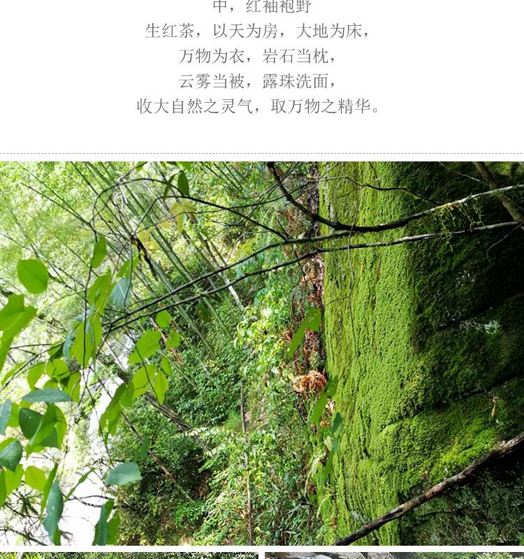 红秀袍野生红茶_03.jpg